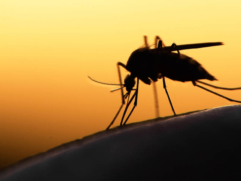 West Nile-Infected Mosquitoes Found In Westchester