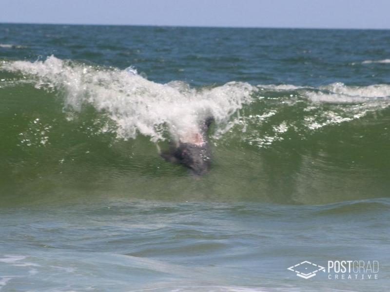 Possible N J Shark Attack On Wounded Dolphin Caught On
