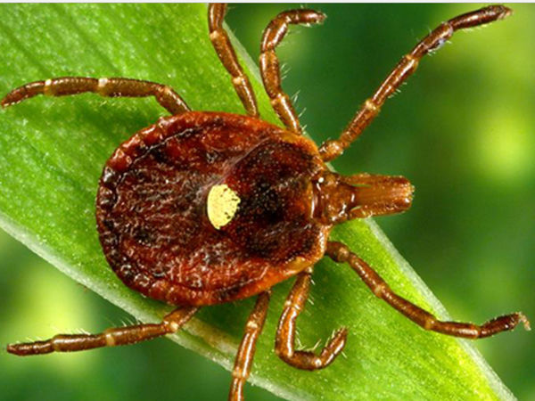 Another Tick-Borne Disease In PA — With Potentially Strange Side Effects