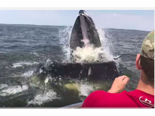 Gigantic whale jumps at boat off new jersey video for Fish tale boats