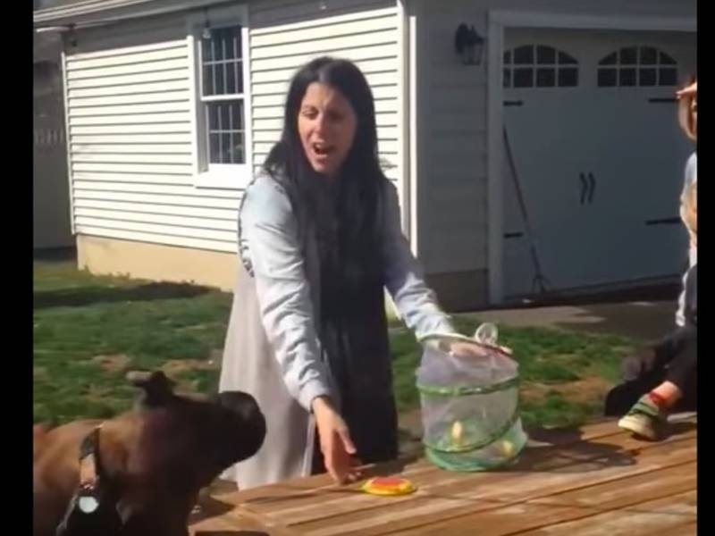 WATCH: NJ Family Dog Eats Butterfly Kids Raised For Weeks ...