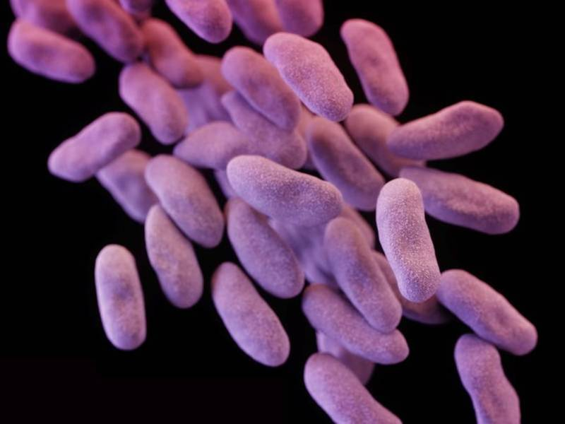 More Produce Linked To E. Coli Outbreak, Recall Issued In NJ