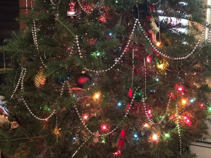 Keep Your Tree Healthy Past Christmas In The Hudson Valley - Keep Your Tree Healthy Past Christmas In The Hudson Valley New