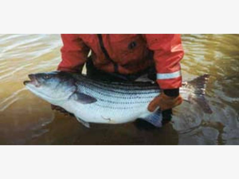 Fishing illegally off piermont pier nyack ny patch for New york state fishing license online