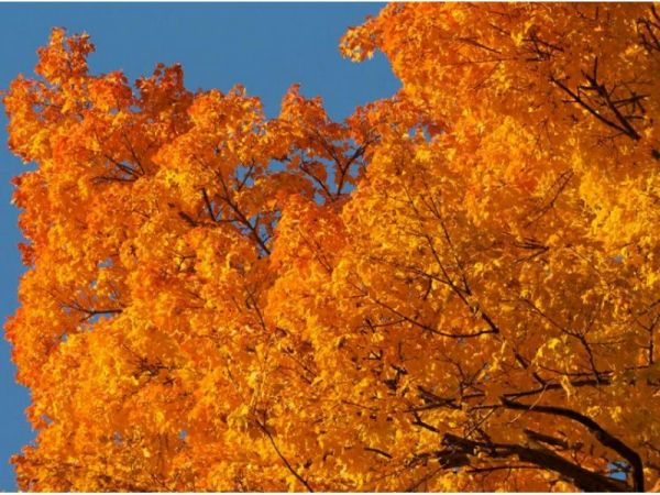 Fall Foliage 2016 Color Nears Peak In Central Maryland