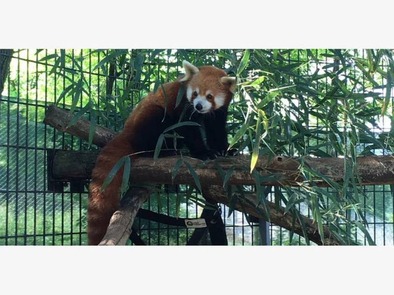 Red Panda Dies, Stanley Cup Star, Reporter Cursed At: News Nearby