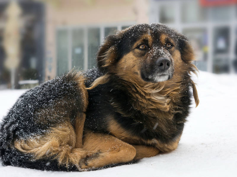 Bring Pets Indoors As Temperatures Plunge Or Face Fines