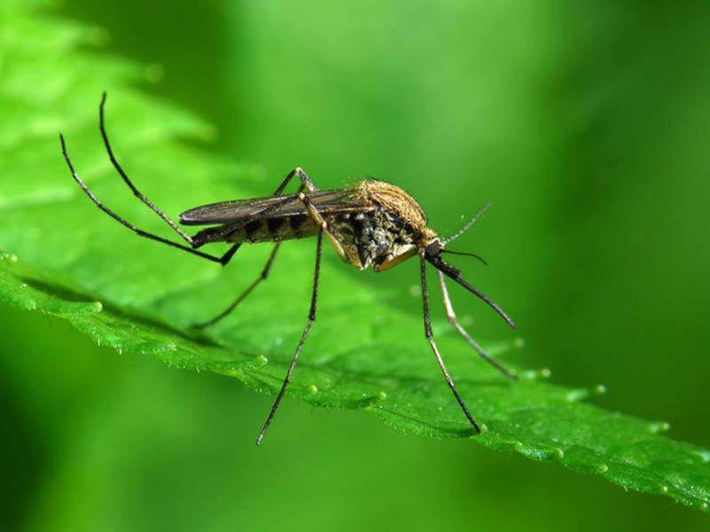 Richmond One Of The Worst Mosquito Cities Nbc12 Wwbt Va News On Your Side