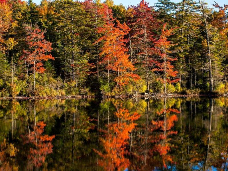 Fall Foliage Map 2018: When Autumn Leaves Peak In Illinois