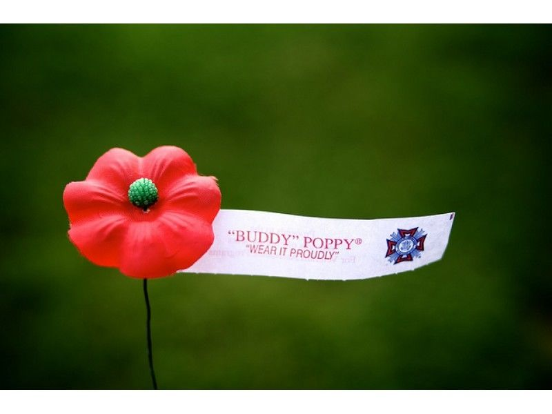 Plymouth canton veterans will be distributing buddy poppies this plymouth canton veterans will be distributing buddy poppies this week mightylinksfo