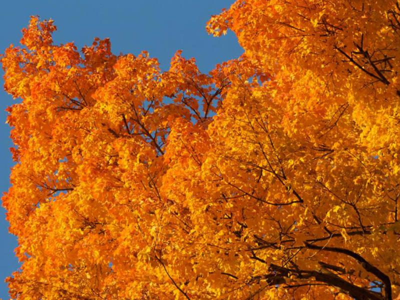 When Is The First Day Of Fall 5 Facts About Autumn