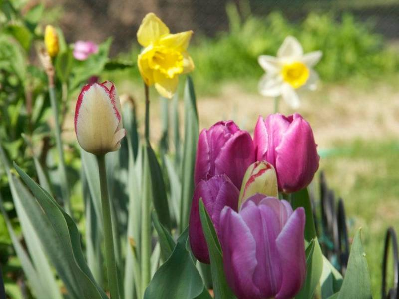 When First Day Of Spring Arrives: 5 Need To Know March Dates