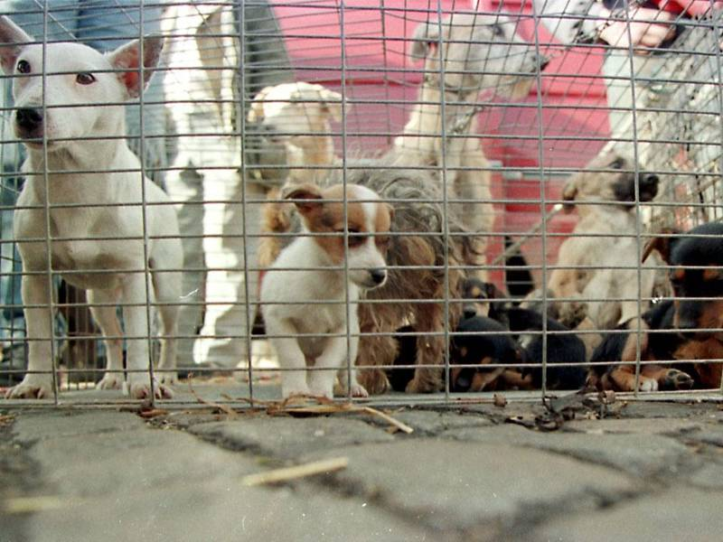 Horrible Hundred Puppy Mill List Lacks Critical Usda Information
