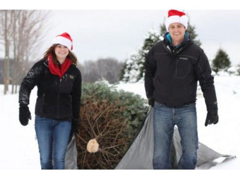 Where to Cut Your Own Christmas Trees in the Chicago Suburbs and ...