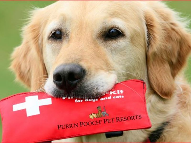 Be Prepared To Help Your Pet In An Emergency Pet First Aid And Cpr