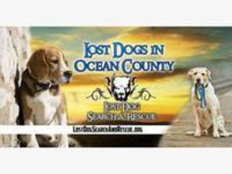 Beachwood Dog Rescue
