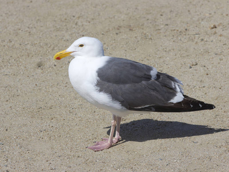 man to go to trial for killing seagull in sea isle city report