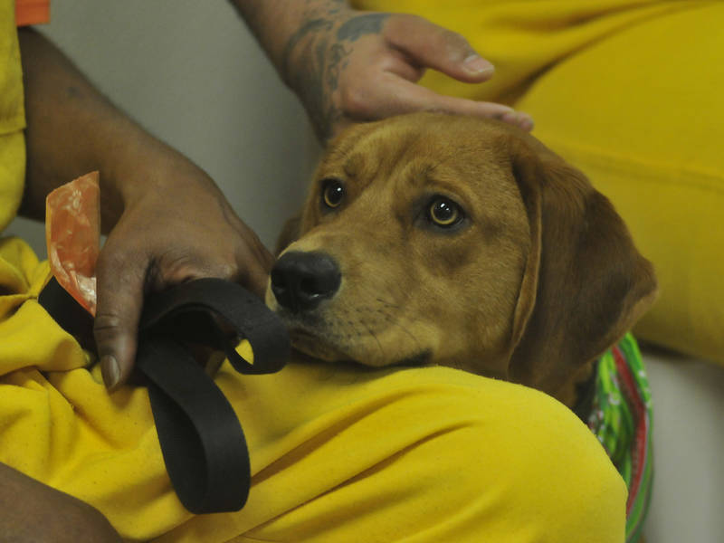 Pets Trained By Inmates Paired With Vets In Camden County