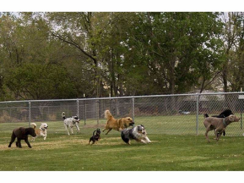 Off Leash Dog Parks In Ma