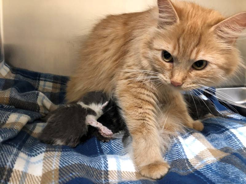 watch homeless cat nurses kitten while mom recovers from surgery