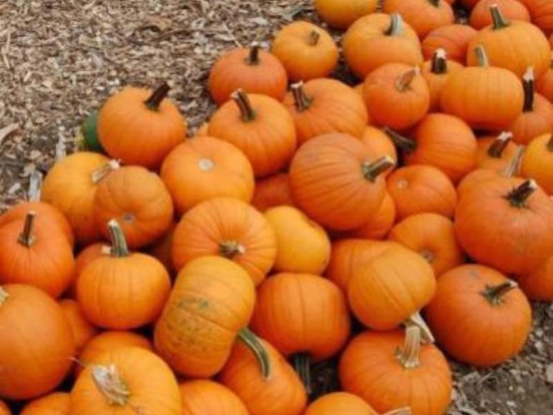 Harvest Fest, Roshhashanah Service: Events On The Natick Calendar